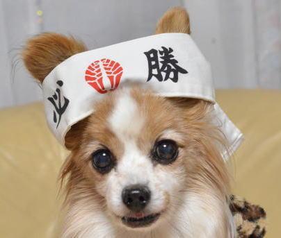 鉄子(パピヨン)
